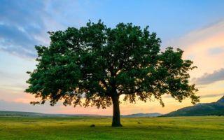 К чему снится дерево во сне: толкование в сонниках
