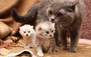 Сонник: Кошка рожает