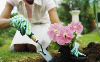 К чему снится сажать цветы во сне: значение в сонниках