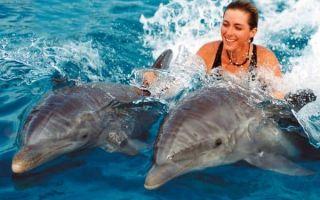 Плавать с рыбами — Сонник