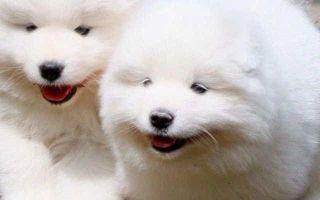Сонник: Белый щенок