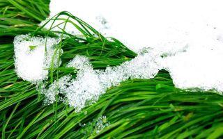 К чему снится летом снег во сне, сонник — снег летом
