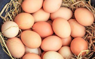 К чему снится яйца во сне: толкование по сонникам