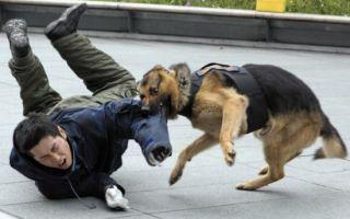 К чему снится нападение собаки