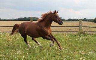 К чему снится лошадь во сне: толкование по сонникам