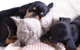 К чему снятся животные во сне: толкование по сонникам