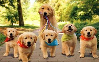 Сонник: Собака на поводке