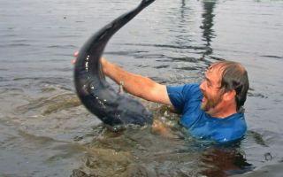К чему снится ловить рыбу руками во сне: толкование по сонникам