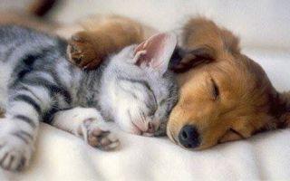 К чему снятся кошки и собаки