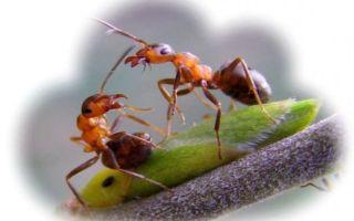 К чему снятся муравьи во сне: толкование по сонникам