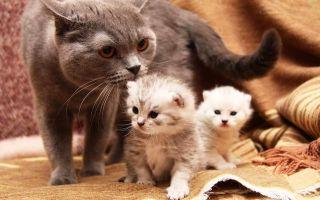 К чему снится кошка с котятами во сне: расшифровка в сонниках