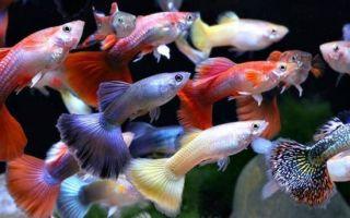 К чему снятся маленькие рыбки