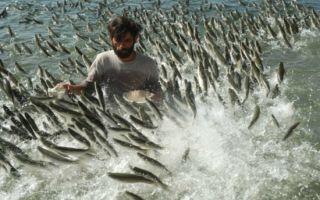 К чему снится много рыбы