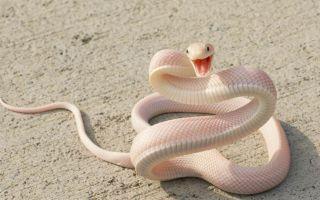 К чему снится белая змея во сне: толкование по сонникам