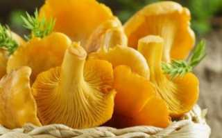 К чему снятся грибы «Лисички»