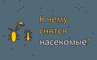К чему снятся насекомые во сне: толкование сонников