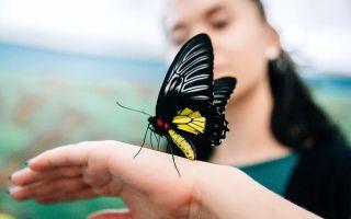 К чему снятся бабочки во сне: трактовка сонников