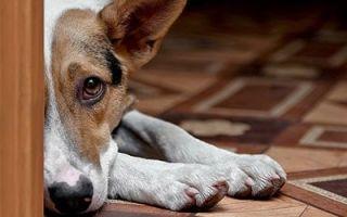 Сонник: Собачье говно