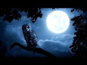 Ночь и сова