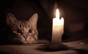 Кошка и магия